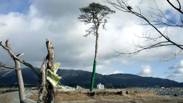 abide ağaç