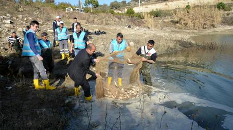 seyhan baraj gölü balıkları