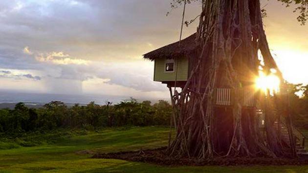 otantik ağaç otel