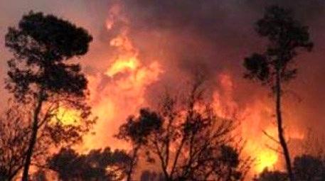 Hatay'daki orman yangınında 2 hektar alan zarar gördü