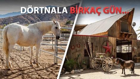 at çiftliğinde tatil