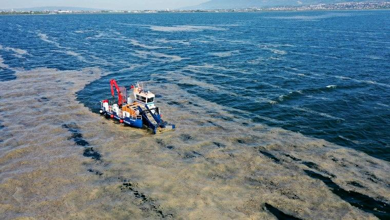 İzmit Körfezi'nden 100 ton deniz salyası temizlendi!