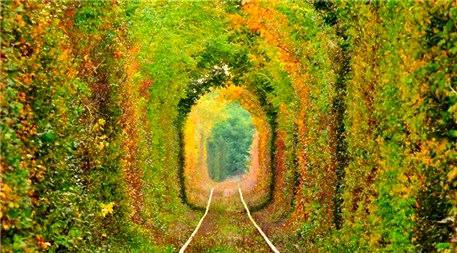 Ağaç ve çiçeklerle kaplı muhteşem yollar!