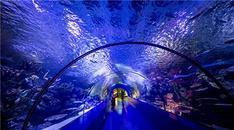 Antalya Akvaryum Kovid-19 tedbirleriyle ziyaretçi ağırlıyor