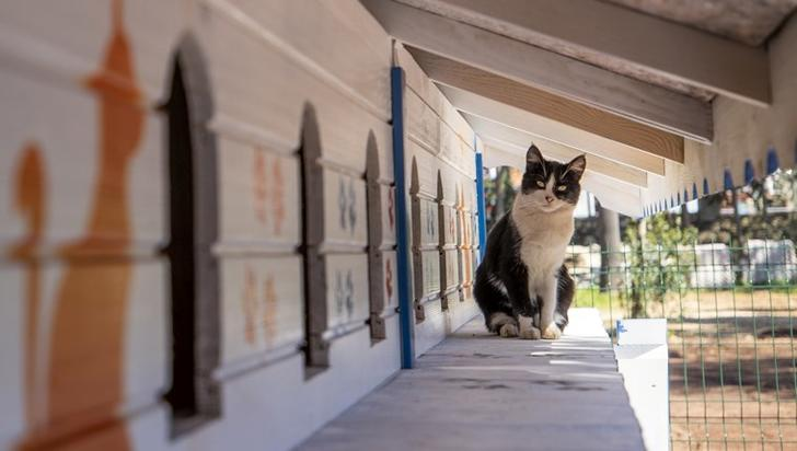 """Dokuma Modern Sanatlar Galerisi'nin batı tarafına, kedilere daha konforlu barınma alanı sunabilmek amacıyla ahşaptan 3 katlı, 64 odalı, duvarlarında rengarenk pati ve resimlerin olduğu bir """"apartman"""" inşa edildi."""