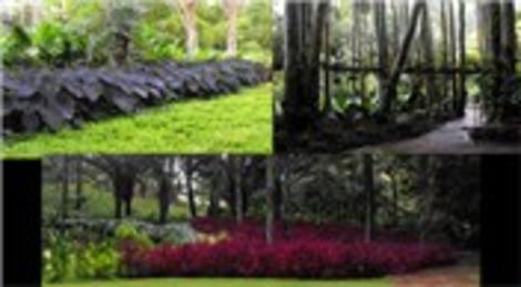 Brezilyalı milyarderin sanat parkı