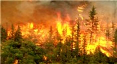 Balıkesir Ayvalık'ta yangın!