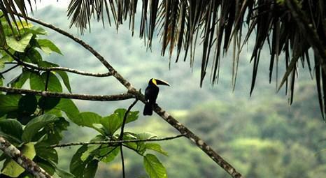 Kostarika dünyanın en mutlu ülkesi seçildi!