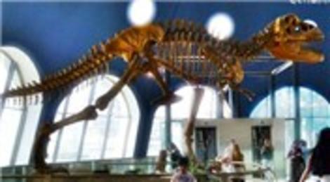 Forum İstanbul AVM'de dinozor kemikleri çıktı!