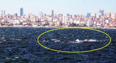 İstanbul Vordonisi Adası depremde sular altında kaldı!