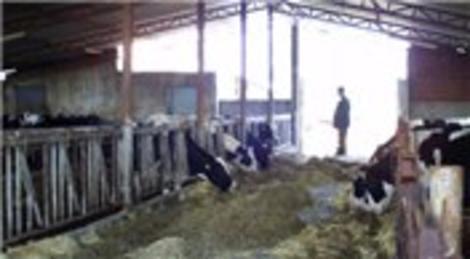 Süt Kardeşler Çiftliği, Azer İnşaat ve Bayburt Group ortaklığında kuruldu!