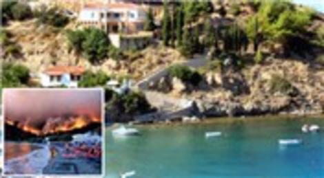 Sakız Adası'ndaki yangında adaya özgü damla sakızı ormanları yok oldu!