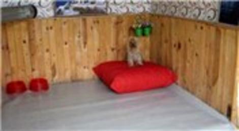 Samsun Tekkeköy'de köpekler için özel otel kuruldu!