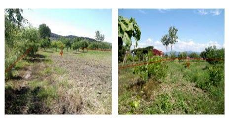 Darüşşafaka Cemiyeti, Çanakkale Gelibolu'daki meyve bahçesini yeniden satışa çıkardı!