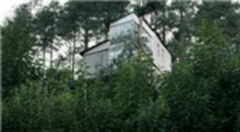 Artvin Hopa'da çam ağacının üstünde yapılan dubleks ev böceklerin istilasına uğradı!