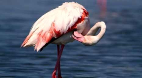 İzmir Gediz Deltası'nda Çevre Etki Değerlendirme Süreci'nin kazananı flamingolar oldu!