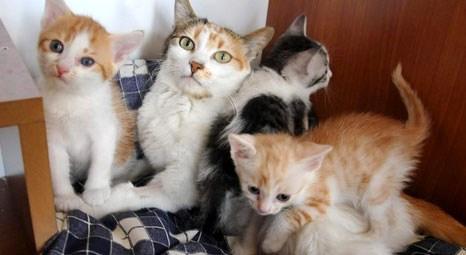 Burdur'un ilk kedi evi hizmete girdi!