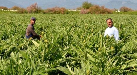 Balıkesir'de İsmail ve Halil Başa 50 dönüm bataklığı tarım arazisine dönüştürdü!