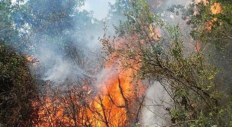 Beykoz Çavuşpaşa'daki ormanlık alanda yangın çıktı!