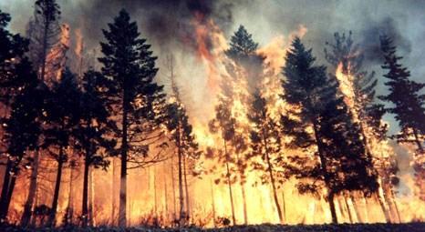 Veysel Eroğlu: Muğla'da 265 hektar orman kül oldu!