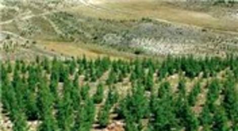DSİ: On buçuk yılda 2 milyar 800 milyon fidan toprakla buluştu!