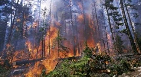 Bodrum Mumcular'da 45 hektar ormanlık alan yandı!