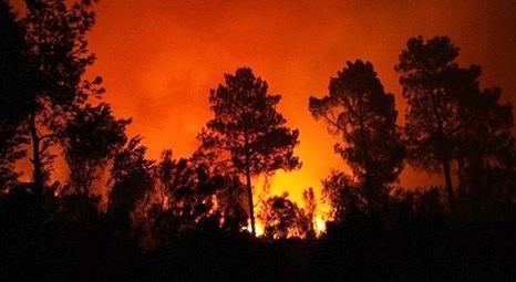 Muğla'nın Seydikemer ilçesinde çıkan yangında 2 hektar alan zarar gördü!