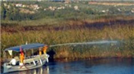Sakin kent Muğla Akyaka'daki yangın 500 dönüm sazlık zarar gördü!