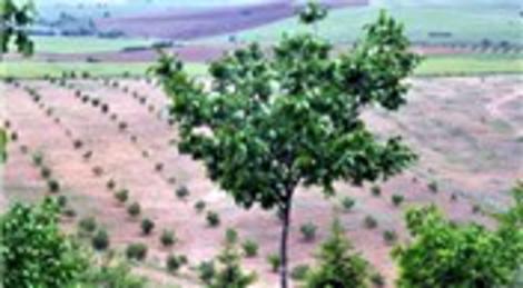 Kırşehir'de Hazine arazileri ceviz üreticilerine tahsis edilecek!