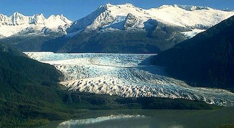 Alaska'daki Mendenhall buzulunun altından orman çıktı!