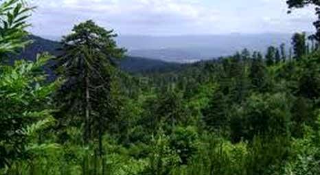 Kazdağları'nda orman yangınında zarar gören alanda ağaçlandırma yapılıyor