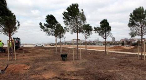 İstanbul Büyükşehir Belediyesi Maltepe dolgu alanını yeşillendiriyor