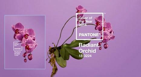 Pantone, ışıltılı orkideyi 2014'ün rengi seçti
