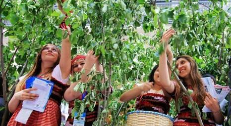 Trabzon Yomra'da Hazine'den satılık fındık bahçesi