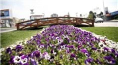 Esenler Belediyesi Esenler'e 800 bin çiçek dikti