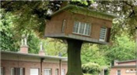 İlginç ağaç evler görenleri şaşkına çeviriyor!