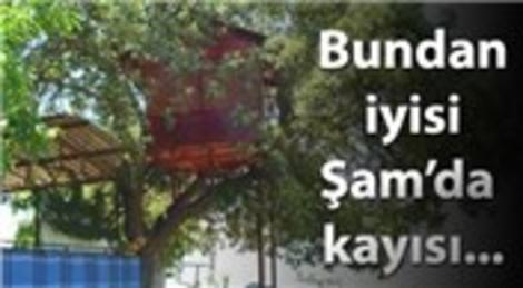 Serinlemek için ağaç ev yaptı, kuşlara komşu oldu