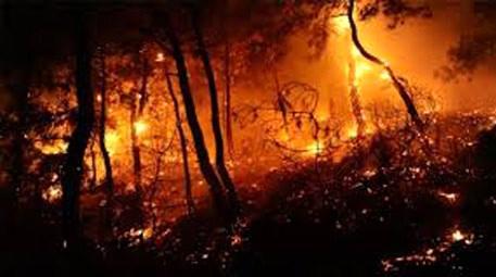 Muğla'da orman yangını… 30 hektarlık alan kül oldu!