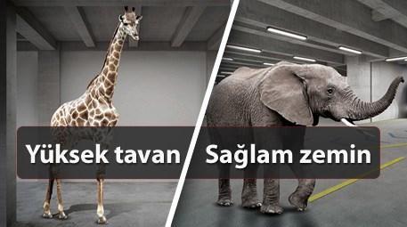 Ofisinizde bir zürafa bile yaşayabilir