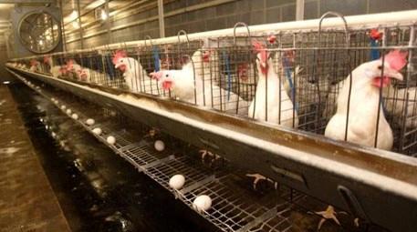İzmir'de 7 tavuk kümesi ile 6 bakıcı evi arsası satılıyor!