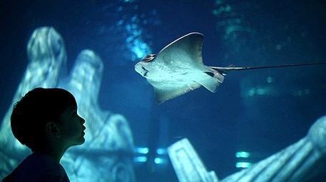 Merakla beklenen İstanbul Sea Life Akvaryum açıldı!