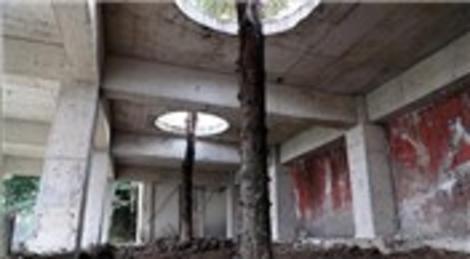 Çay evi inşaatındaki ağaçlar, kesilmekten böyle kurtuldu!