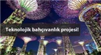 Singapur'daki ağaçlar bilim kurgu filminden fırlamış gibi!