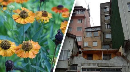 Helenium Çiçeği ile kentsel dönüşüme çare olacak