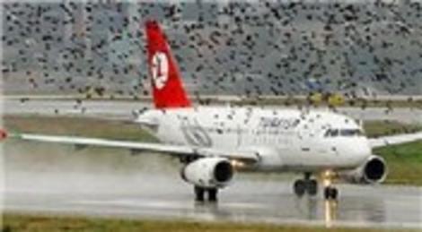 Havaalanlarında kuş sürüsü tehlikesi bitiyor!
