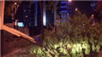 İstanbul'da fırtına ağaçları devirdi!