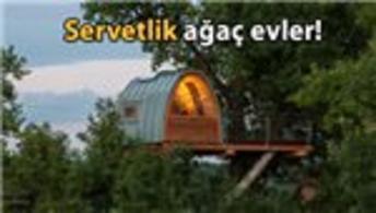 Ünlülerin yeni gözdesi ağaç evler!