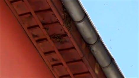 zonguldakı arılar bastı