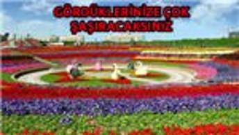 Dünyanın en büyük bahçesi: Dubai Miracle Garden