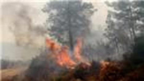 Muğla Köyceğiz'deki orman cayır cayır yanıyor!